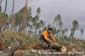 Évaluation des risques dans la transformation du bois doit